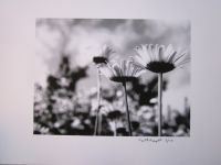 Art & Photography Prints - Set (2) - Flowers - Vacheresse