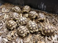Pets / Pet Accessories CB Tortoises and Turtles